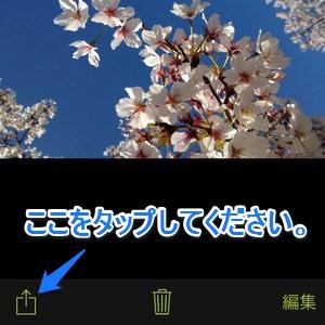 procamera-photocon-sakura-2015-01